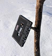 Music Cassette Tape in Tree
