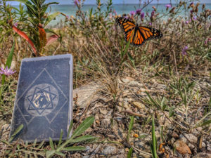 Olde Growth Cassette Tape with Butterfly