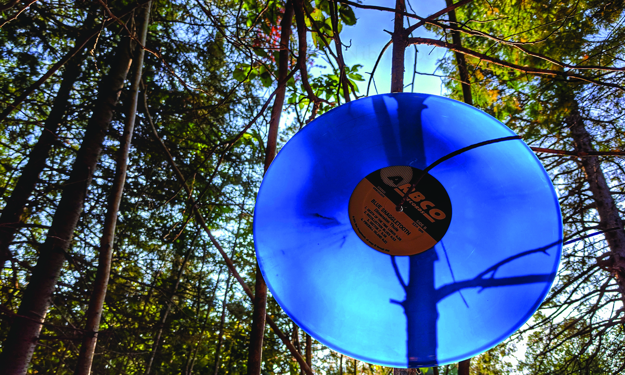 Blue Vinyl LP Review Photo In Tree